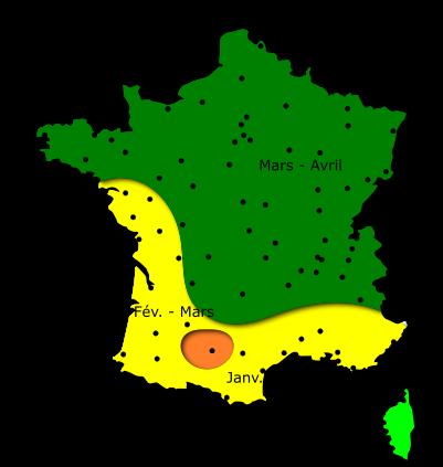 Carte des risques d'allergies pour le pollen de Frêne